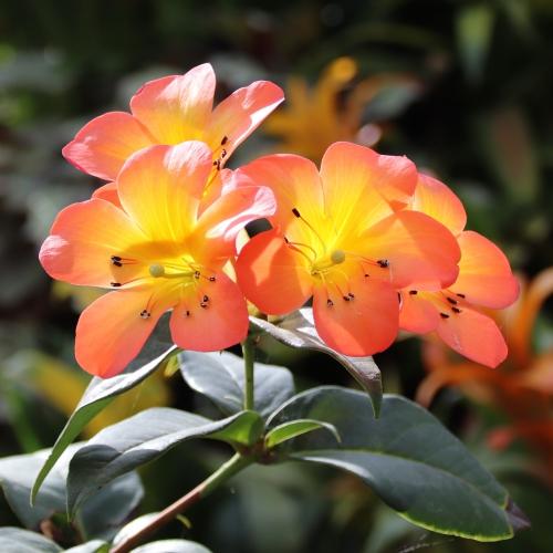 http://www.gardensbythebay.com.sg/en.html