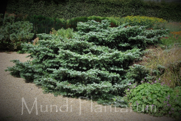 Savill Garden in Windsor (England) - 07/2001